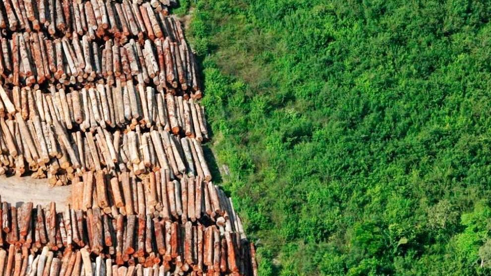 Desmatamento na Amazônia cai 21%, mas aumenta 22% em unidades de conservação