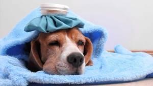A importância do combate e prevenção do câncer nos animais