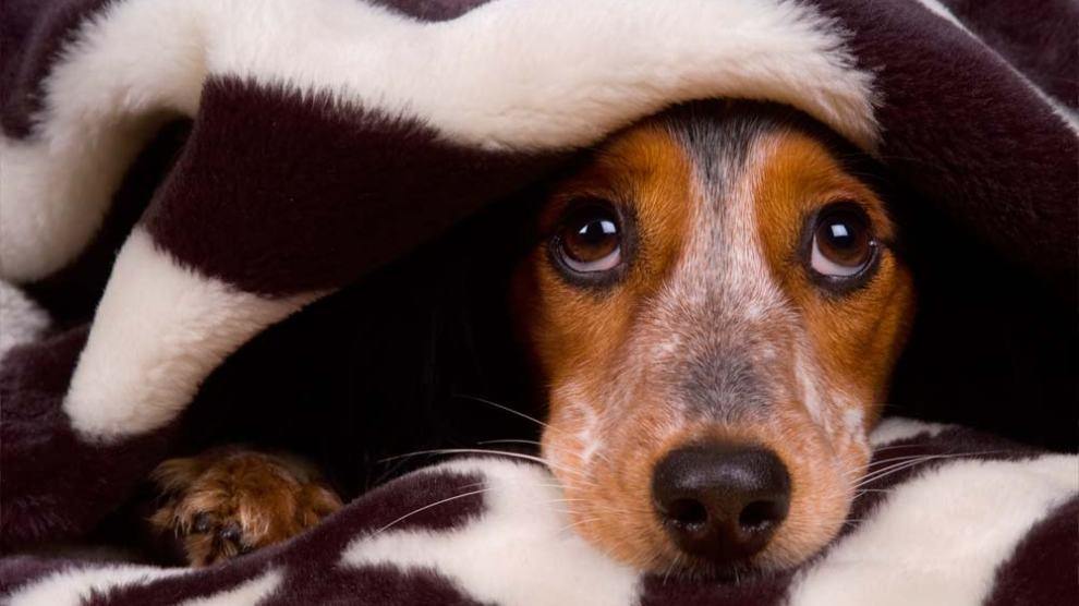 Seu cachorro tem medo de chuva e trovões? Veja dicas de como acalmá-lo