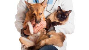 IBRAM lança nova campanha de castração de animais; pessoas de baixa renda terão prioridade