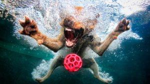 Com esse calor, que tal levar seu amiguinho para nadar com segurança?