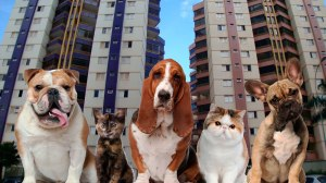 Conheça as regras para animais em condomínios