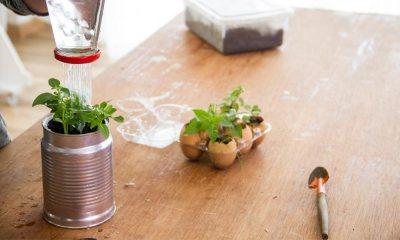 5 Ideias para você montar sua horta em casa