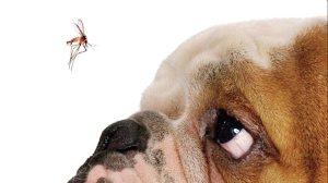 Leishmaniose: seu cachorro pode estar contaminado sem você saber