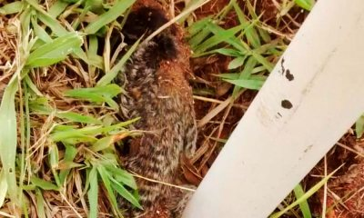Febre amarela: macaco achado morto em São Sebastião é levado para análise na UnB