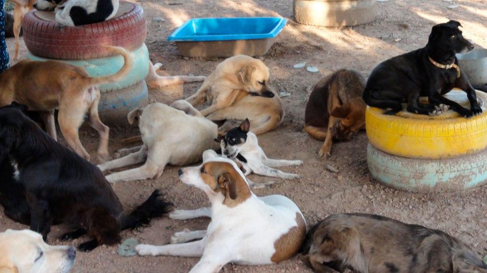 Abrigo para cães e gatos do DF está com mais de 700 animais e precisa de ajuda