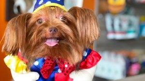 CasaPark realiza carnaval para pets com animação da banda Papel Machê