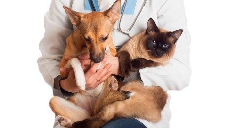 IBRAM abre inscrições para castração de cães e gatos