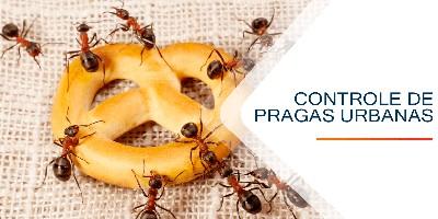 dedetização e controle de pragas urbanas em Caieiras