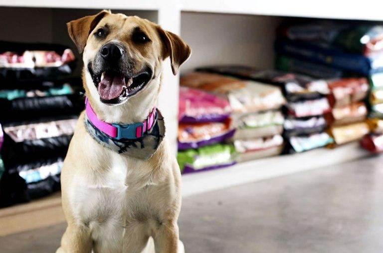 Pet Shop em Salto