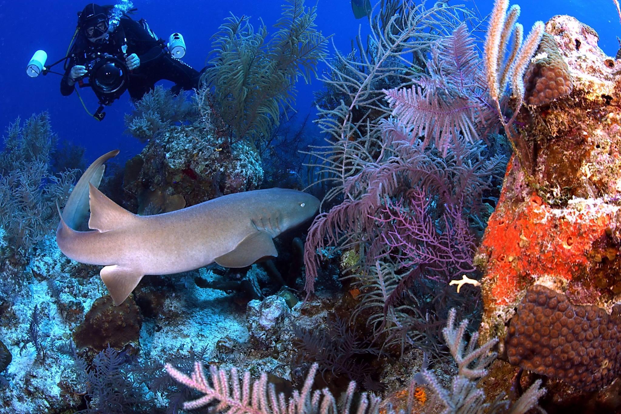 Underwater Naturalist (Photo Credit -)