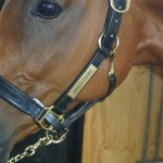 English leather headcollar