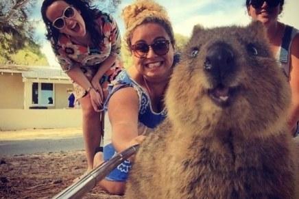 Marsupial selfie