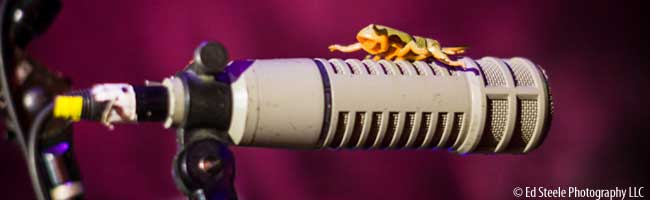 bug on a microphone by ed steele