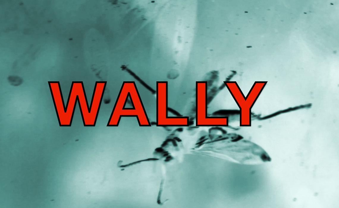 Wally The Wasp Slider