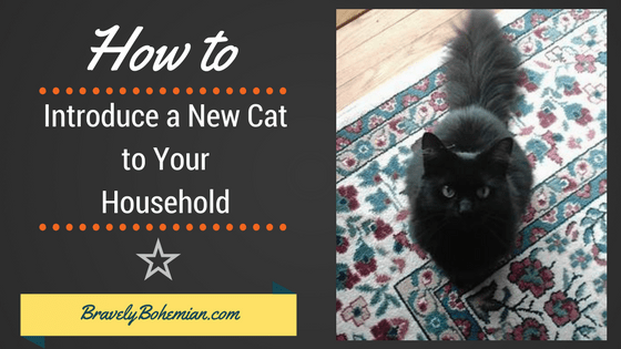Introducing New Cats to Your Home