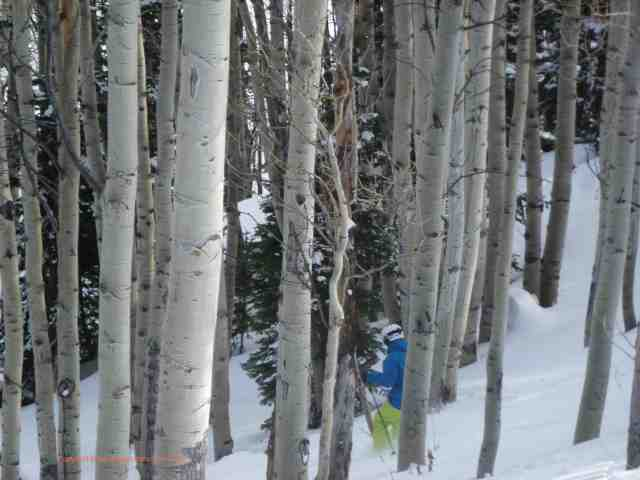 aspen mountain trees colorado