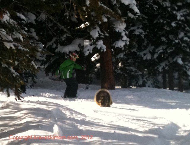 porcupine at snowmass