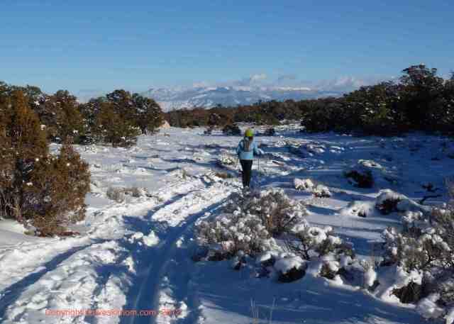 bluebird cross country ski day
