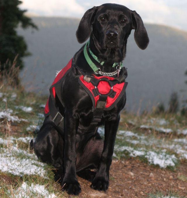 kenya keystone avalanche dog