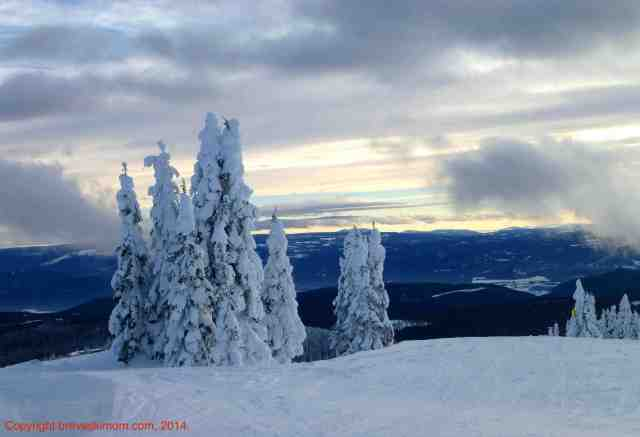 I love these trees -- called Snow Ghosts -- at Silver Star, BC. I also loved the downhill and cross-country skiing and all the free extras!