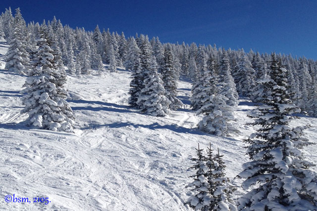 gladed skiing vail