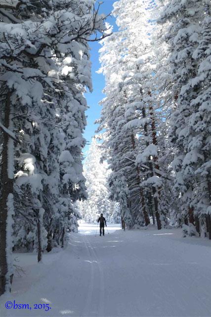 snowy grand mesa