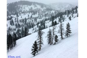 powder mountain trees