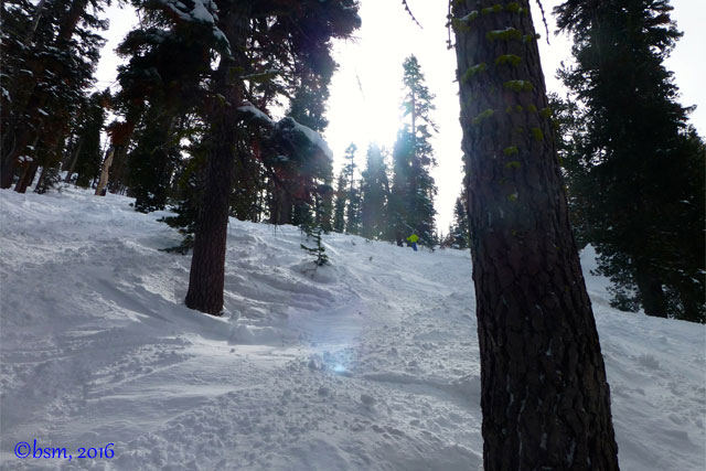 tree skiing north star