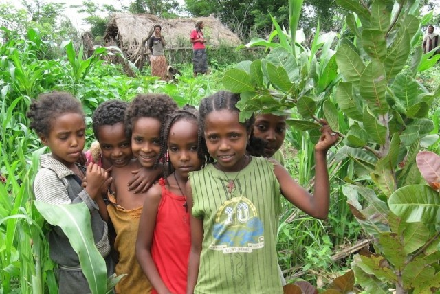 trees for the future children africa