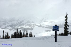 snow crested butte