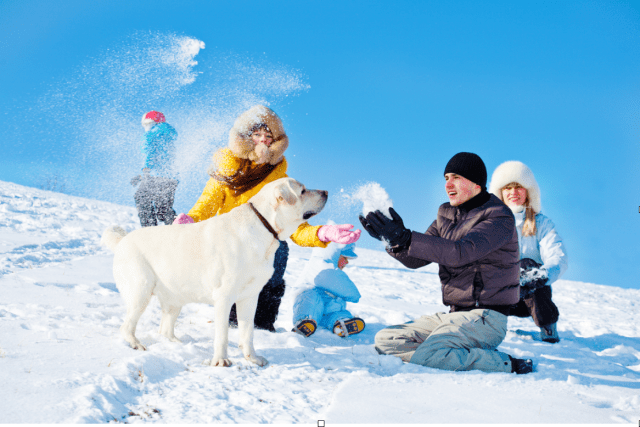 fun in the snow with dogs and kids