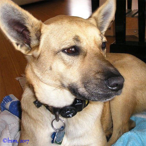 a photo of a dog named Chawie