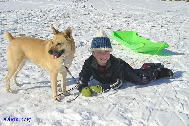 sledding with a dog