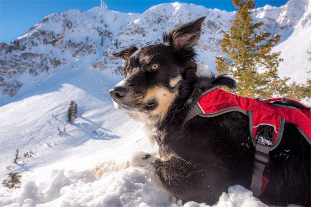 snowbasin-utah-avalanche-dog-stash