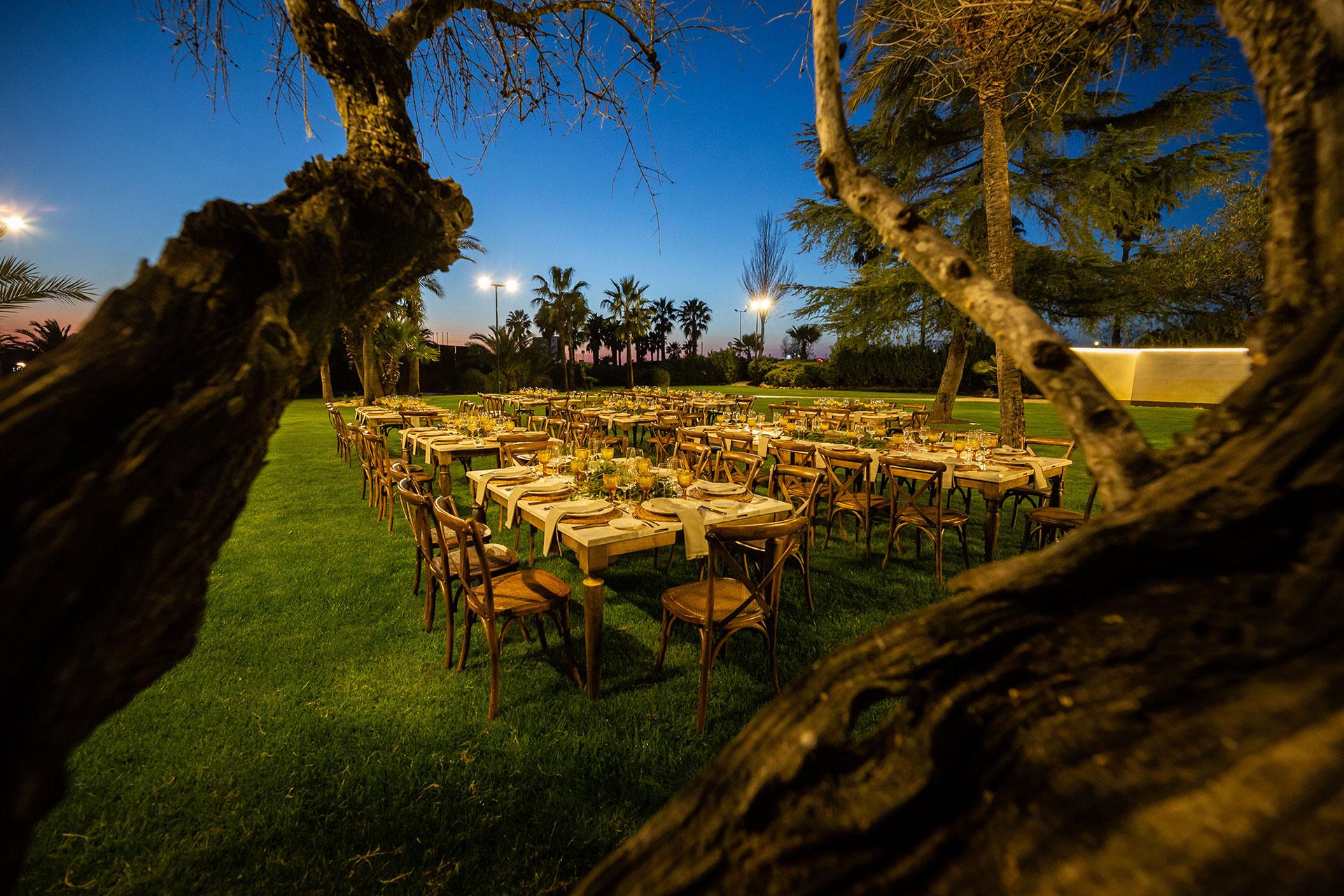 jardin-del-olivar-aralia-3