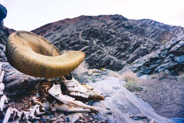 bighorncanyon