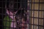 羅興亞危機 婦女泣訴緬甸軍強姦