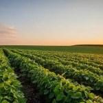 4月USDA報告:巴西產量上調,中國壓榨下調,美豆庫存不變