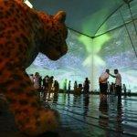 2020迪拜世博會:巴西館開放三天接待遊客1.2萬人次