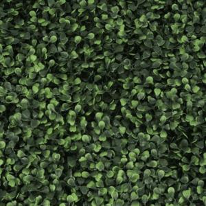 Singapore Boxwood Ivy