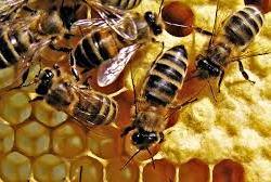 O mel das coisas