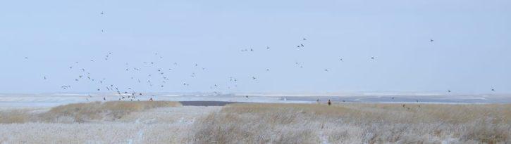 There were plenty of birds.