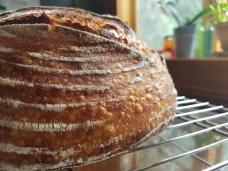 crust close-up