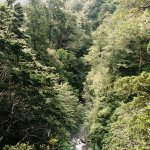 Gentle Annie Track - Wairarapa