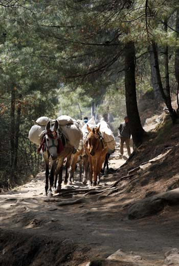 Mule train below Namche