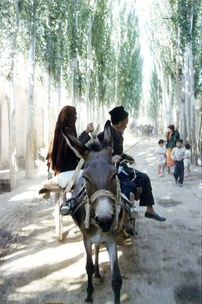 Avenue of Poplars & Mule Cart on the way to Kashgar Sunday Market