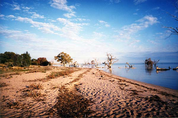 Lake Cawndilla, Menindee Lakes, Kinchega National Park 2001