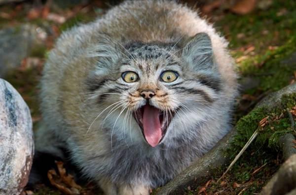 17 strange animals that