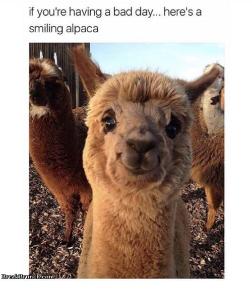 10 funny animal memes  BreakBrunch